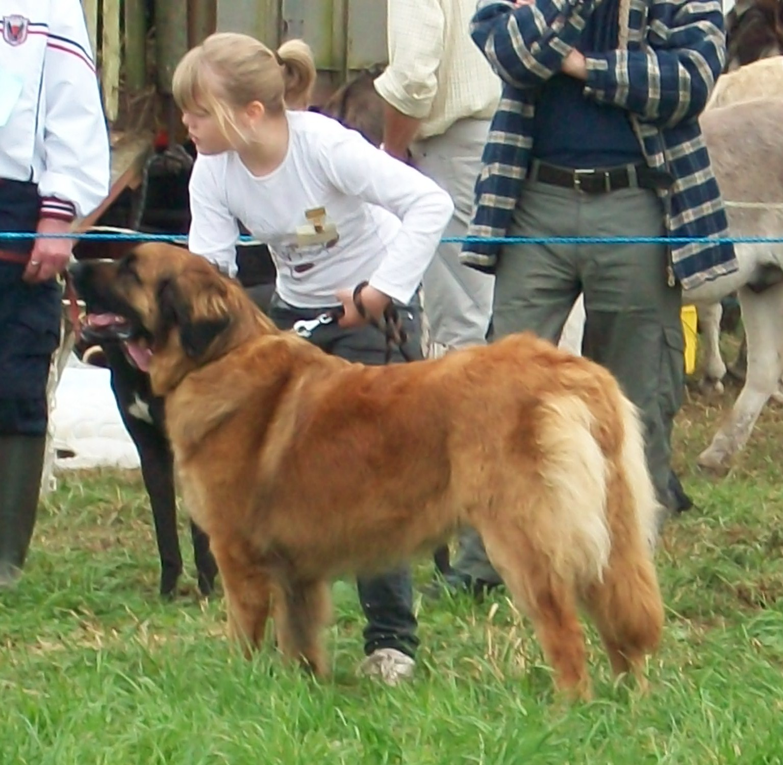 Open Dog Shows Carmarthenshire